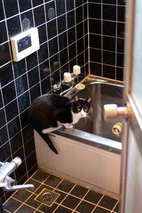 お風呂場の猫 FYI00092820