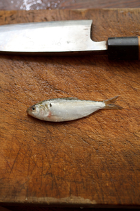 新子(コハダの幼魚) FYI00093753