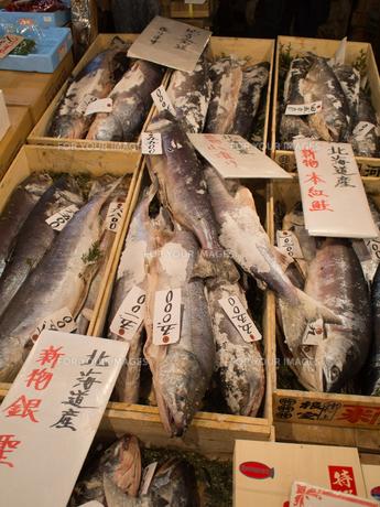 新巻鮭 FYI00093862