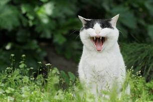 猫笑う FYI00100589