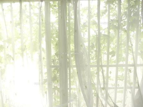 窓 FYI00100598