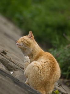 猫 FYI00100713