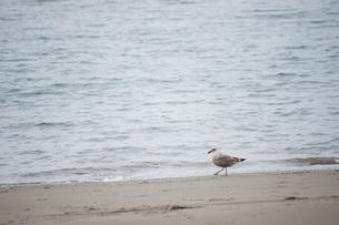 鳥の散歩 FYI00100721