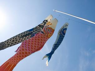 鯉のぼり FYI00100733