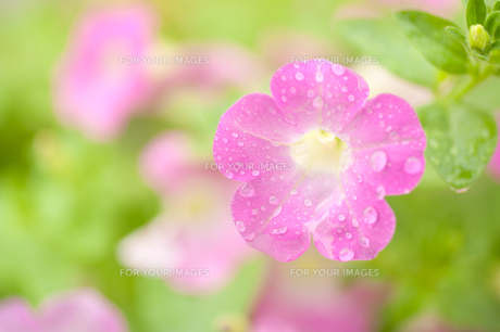 花 FYI00100865