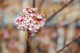 ピンク色の花 FYI00101358
