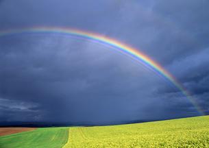虹と丘 FYI00103463