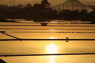 夕日に輝く水張り後の田んぼ FYI00105606