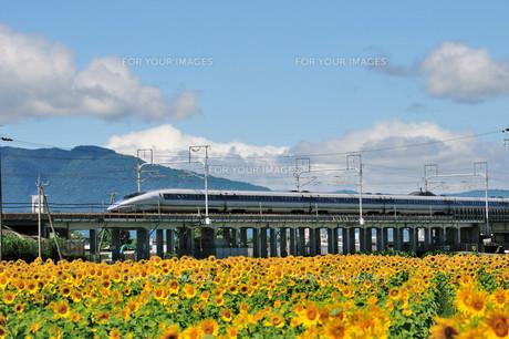 新幹線とひまわり FYI00105642