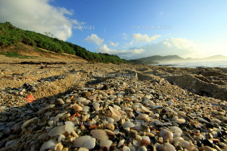 貝殻の海岸 FYI00105713