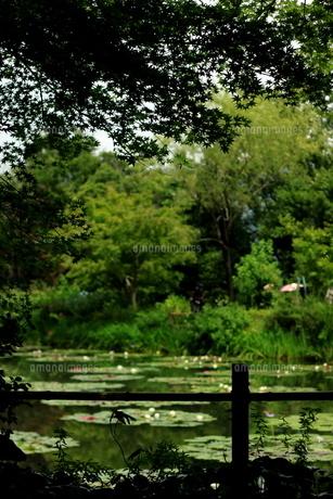 睡蓮の池 FYI00105765