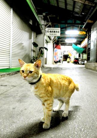 アーケードの猫 FYI00108706