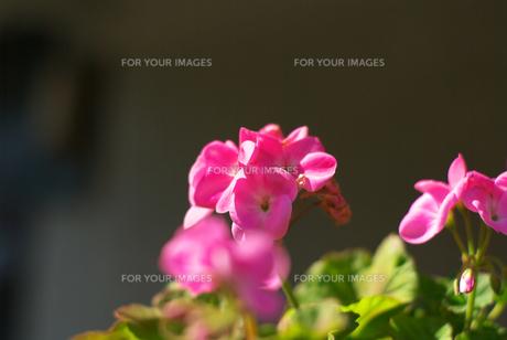 春の花 FYI00108801