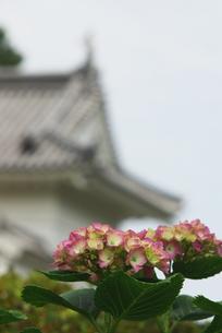 紫陽花と小田原の門 FYI00108832