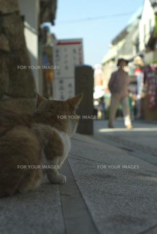 江ノ島の猫 FYI00108868