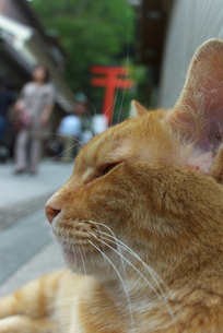 江ノ島の猫 FYI00108894