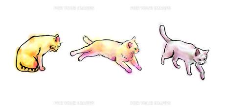 猫三匹 FYI00108896