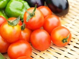 採れたてのトマト FYI00108953