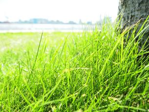 緑の草原 FYI00108961