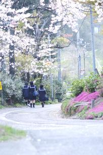 春 FYI00111003