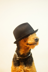 帽子を被った犬 FYI00111786