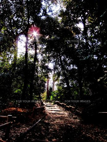井の頭公園の散歩道 FYI00112900