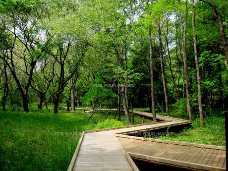 野川公園の自然観察園散策道の素材 [FYI00112934]