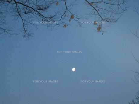 明け方の月 FYI00113949