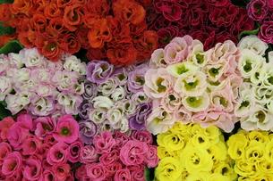 花の詰物 FYI00113952