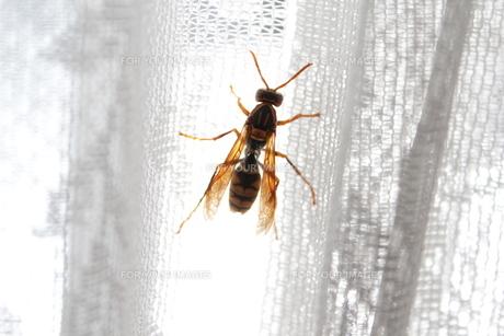 迷い蜂 FYI00114000