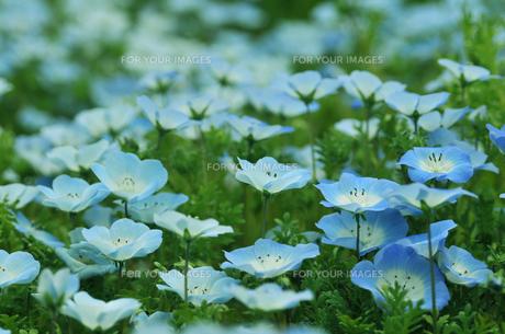 春の草原 FYI00114311