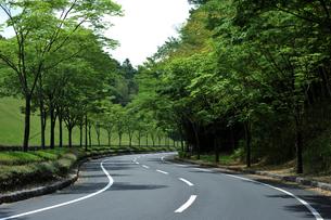 緑の道路-1 FYI00114383