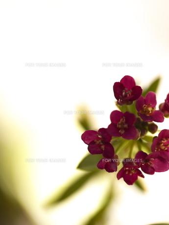小さな花束 FYI00115534
