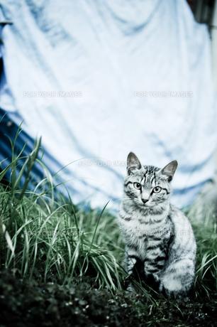 猫1 FYI00115564