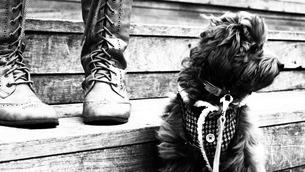犬の散歩 FYI00116556