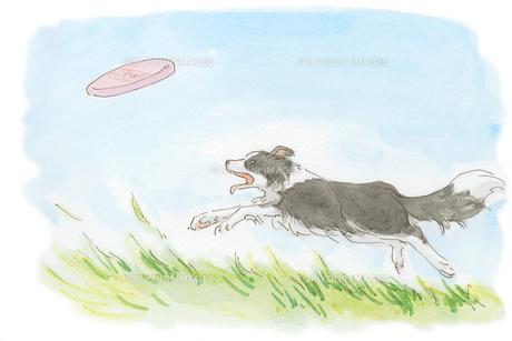 フリスビーを追う犬 FYI00116728
