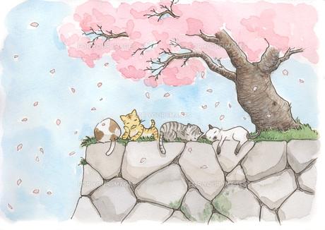 桜の木の下で寝る猫 FYI00116798