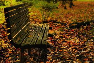 枯れ葉とベンチ FYI00117139