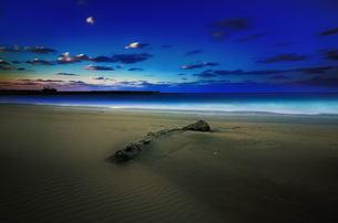 流木 砂浜 海 FYI00117152