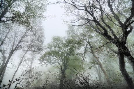 朝靄の森 FYI00117214