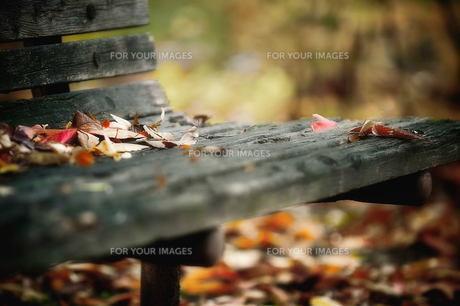 落ち葉とベンチ FYI00117216
