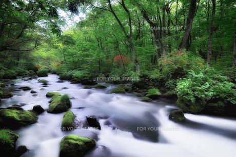 奥入瀬渓流 FYI00117219