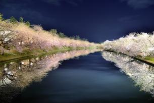 青森県弘前市弘前公園夜桜 FYI00117246
