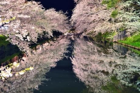 青森県弘前市弘前公園夜桜 FYI00117259
