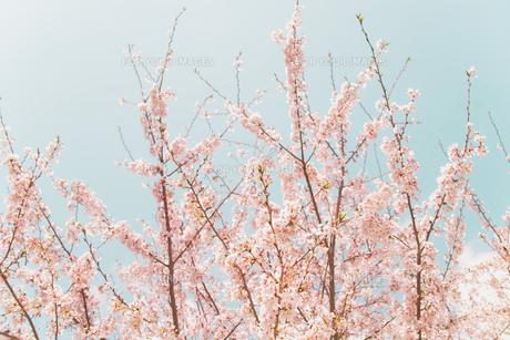 伸びゆく春 FYI00117568