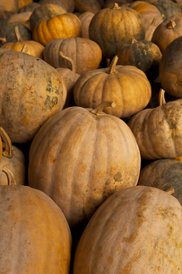 pumpkins FYI00117597