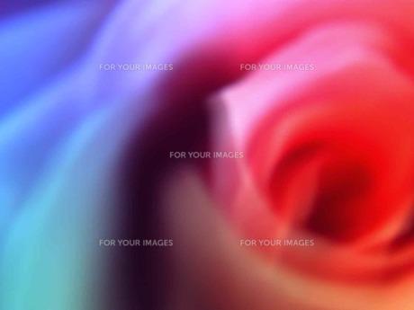 虹色の花弁 FYI00120708
