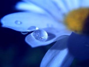 花弁と水滴 FYI00120735
