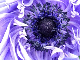 紫の花 FYI00120762