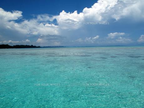 パラオの海 FYI00121733